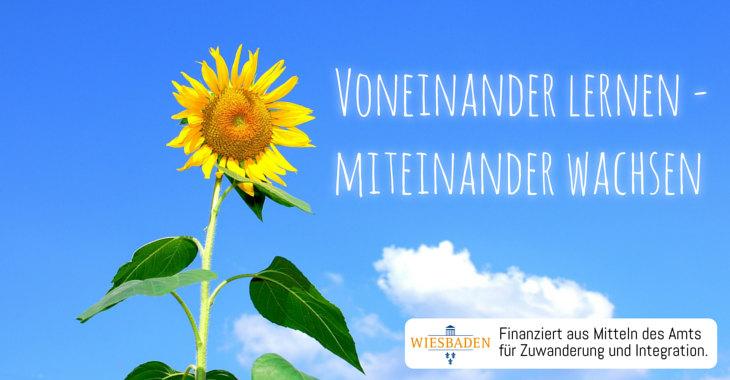 Bild-Sonnenblume